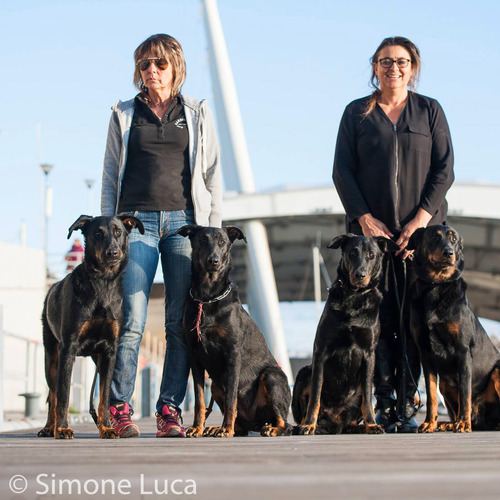Liguria Dog Show Genova 2017